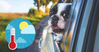 Hund i varm bil